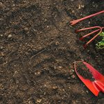 The new approach to garden weeds and why you need it